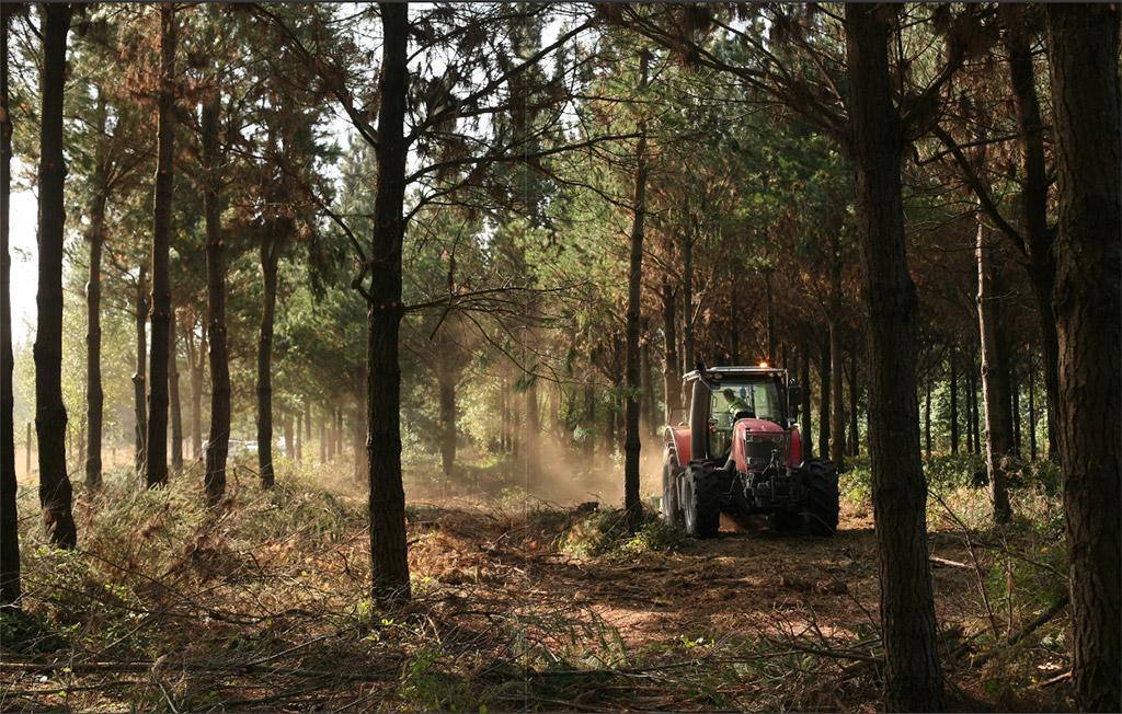 Explotación de bosques en Galicia