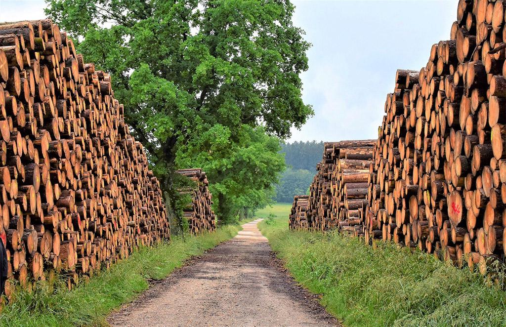 troncos apilados